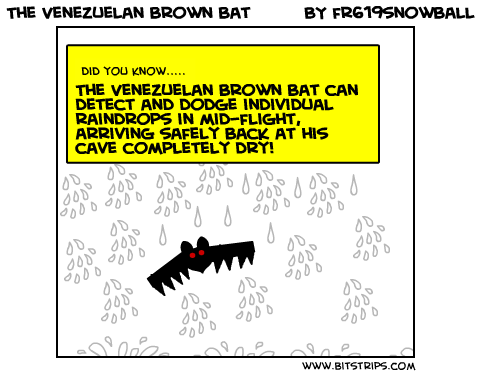 The Venezuelan brown bat