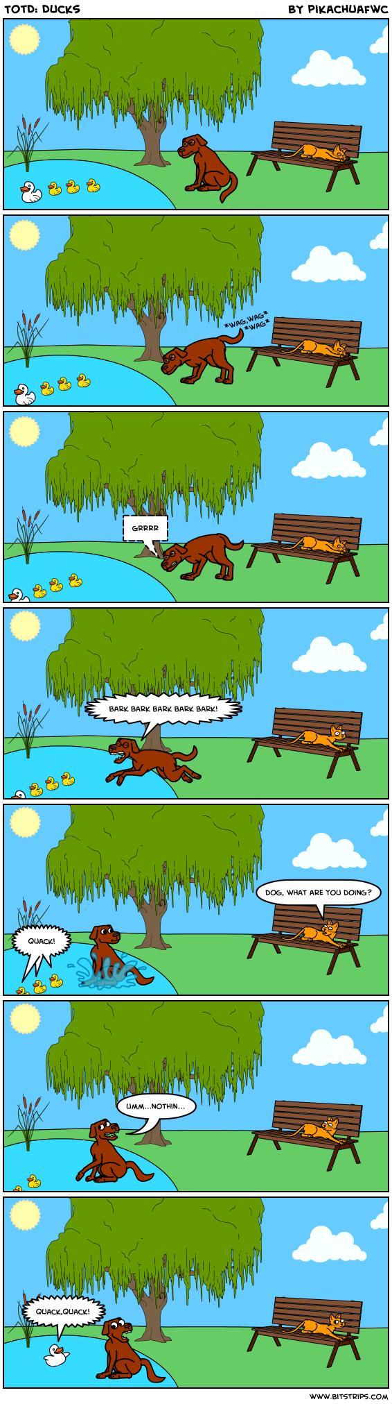 TotD: Ducks