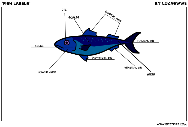 'Fish Labels'