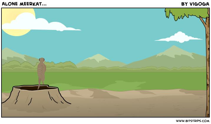 Alone meerkat...