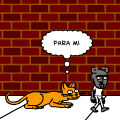 gato vs rat