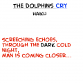 Dolphins Cry