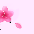 TotD: Cherry Blossom