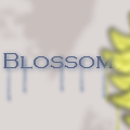 Blossom