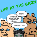 Life at the Barn